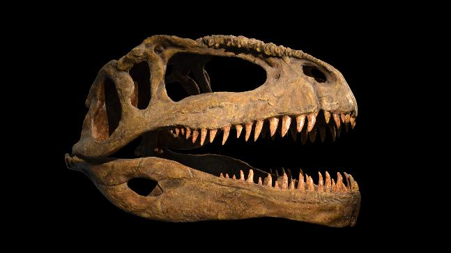 Toxic Flowers: What Truly Wiped Out Dinosaurs?