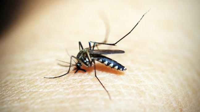6 dangerous diseases that you can contract from a mosquito bite
