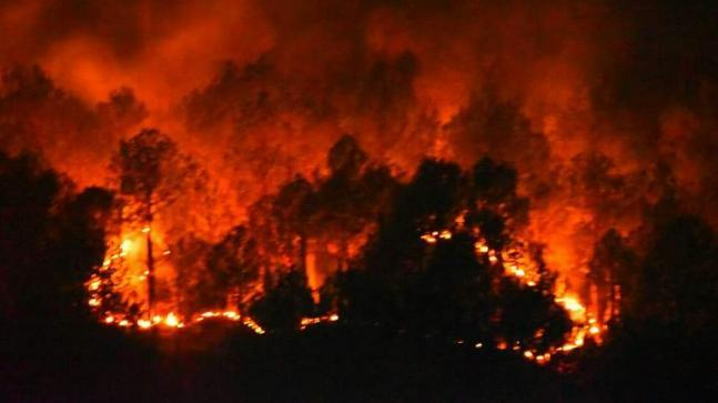 Image result for fire images forest