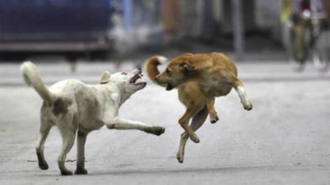 Vet scientists reach Sitapur to probe dog menace