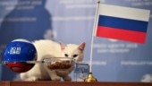 Achilles the Cat picks Russia as winner of inaugural match