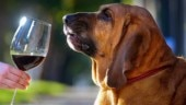 Soon, Bihar Police will get dogs trained to sniff out alcohol