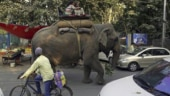 Court orders probe into cruelty against elephants in Jaipur