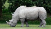 Scientists create embryo containing white rhino DNA that might save the dying species