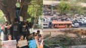 Green court stays tree felling in south Delhi till July 19