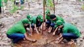 Tree fence at border to fight dirty air in Delhi