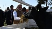 PM Modi in Africa: Why cow is the best gift in Rwanda