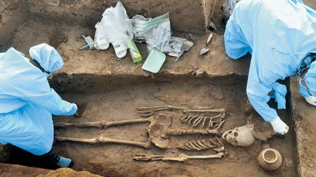 Image result for rakhigarhi skeleton