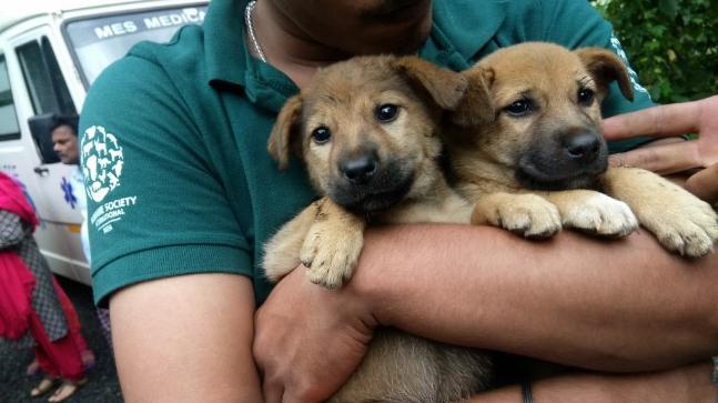 HSI rescue pets in Kerala