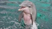 A sexually frustrated dolphin has made a French beach impose a ban on swimming. (Picture for representation)