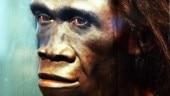human species, Homo erectus, tools, tool-making