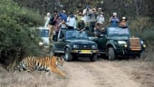 Big cat, black market: How private lodge owners in MP tiger reserves are exploiting the system