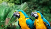Parrots blush like humans during social interactions, finds study