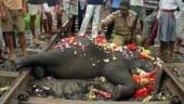 Railways Plan Bee helps in preventing elephant deaths on tracks