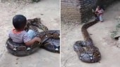 Kid in Indonesia plays with huge python