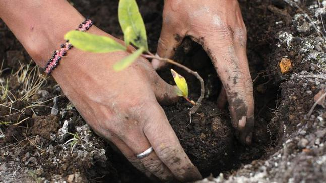Delhi govt plans to plant 5,00,000 saplings today