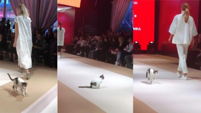 cd1ca0e128 Google News - Cat crashes fashion show runway in Istanbul - Overview