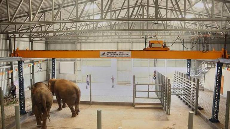 India's first specialised hospital for elephants opens in