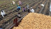 Farmers plan 2-day protest in Delhi to demand better MSP, loan waivers
