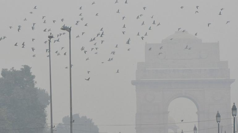 Delhi's toxic air pollution chokes fauna too - Mail Today NewsAir Pollution Effects On Animals