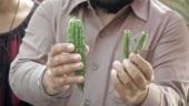 Delhi traders stuff firecrackers into green veggies to register protest