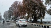 Sudden snowfall causes Rs 500 crore losses to apple growers in Kashmir