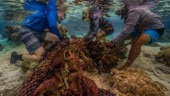 Wastewater pollution making coral reefs sicker: What can we do?