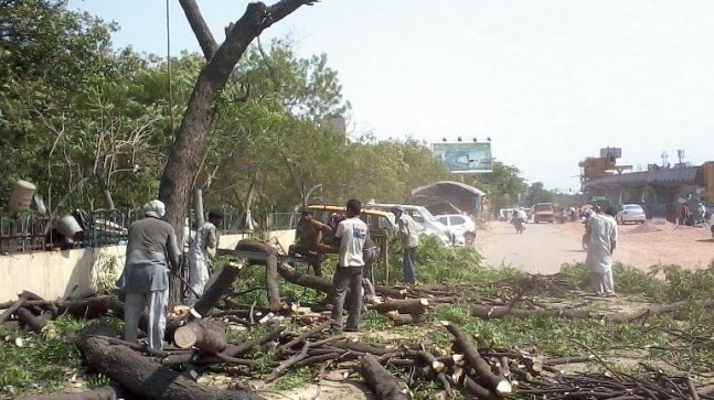Chopping of trees takes its toll as Delhi chokes for oxygen