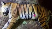 Shiv Sena goes vocal against Maharashtra Forest Minister Sudhir Mungantiwar over killing of Avani