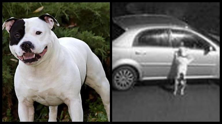 Man Dumps Dog, Drives Away Days Before Christmas