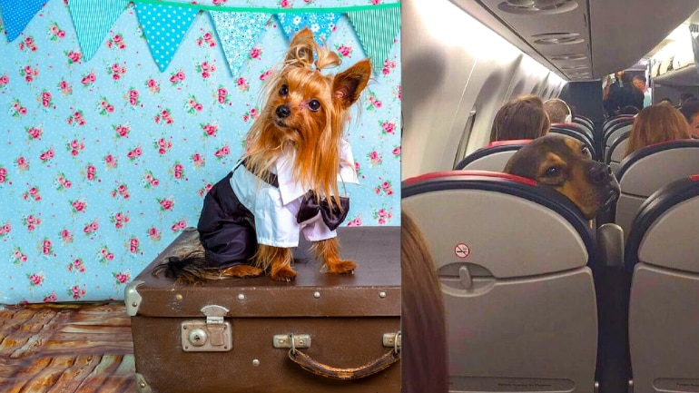 How To Carry Your Pet On A Flight Rules And Charges Information