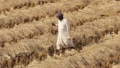 Sop a flop for most farmers: Reality check of solutions offered for agrarian distress