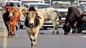 After cow sheds, UP govt to impose gau kalyan cess to protect stray cattle
