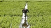 MP cabinet approves farm loan waiver up to Rs 2 lakh, extends cut off date
