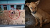 Kolkata: Women seen killing puppy in viral video were nursing students. Both arrested