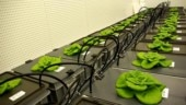 New kitchen garden to be build on the way to Mars: Lettuce on the menu