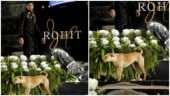 Dog crashes Sidharth Malhotra's ramp walk during Rohit Bal show. Watch hilarious video