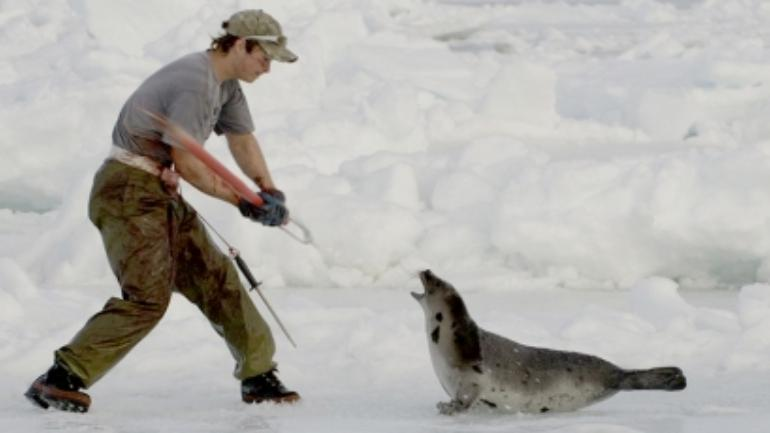 Some seals removed from beleaguered Newfoundland town, officials say