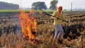 Stubble burning not going to stop on its own, consider granting subsidy to farmers: SC