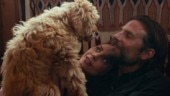Bradley Cooper cast his dog in A Star Is Born, wins Oscat from PETA