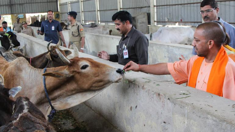 Over 100 cows die in UP villages over 2 days, probe ordered