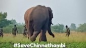 Coimbatore villagers write petition to save wild elephant Chinna Thambi from being tamed as kumki
