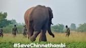 Tamil Nadu govt drops plans of taming wild tusker Chinna Thambi into kumki