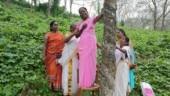 Sabarimala: In U-turn, Travancore Devaswom Board says women can enter shrine