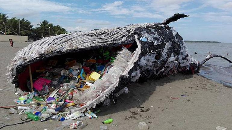 Microplastic, marine mammals, dolphin, whale, seal, health, pollution