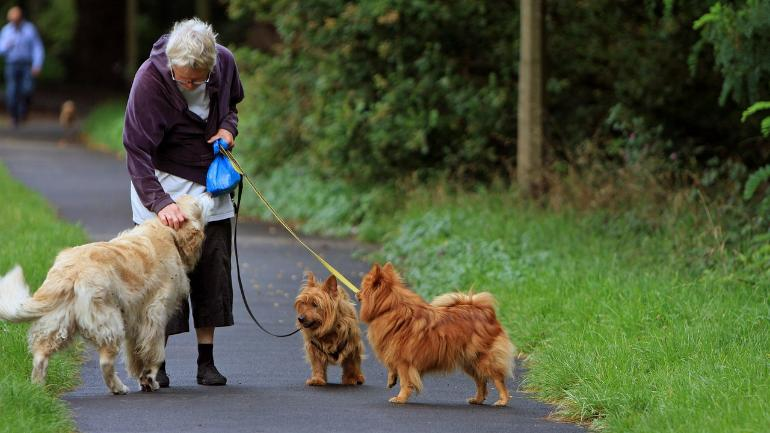 dog walking, dog walkers, walking the dog, dog walking exercise, adults, older adults, seniors, fractures, disadvantages of dog walking, dog walking benefits, injuries