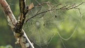 Artificial muscles for robots could be made by spider silk, finds study