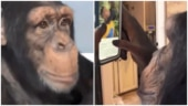 Ape uses iPhone like a pro in viral video. Internet says it is beginning of the end for humans
