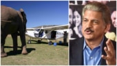 Airvan gets surprise visit from Nelly the Elephant. Anand Mahindra's reply is priceless