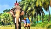 Celebrity elephant stirs Pooram controversy in Kerala